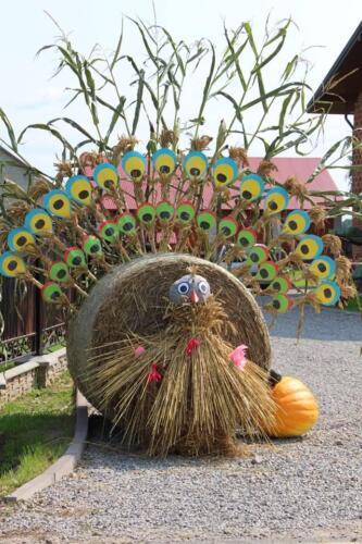 Zdjęcie przedstawia zrobioną z siana i patyków pawę