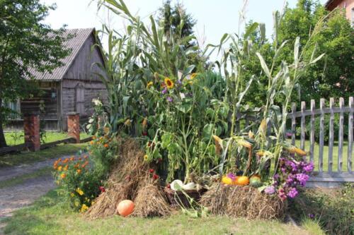Zdjęcie przedstawia rożnego rodzaju rośliny uprawne